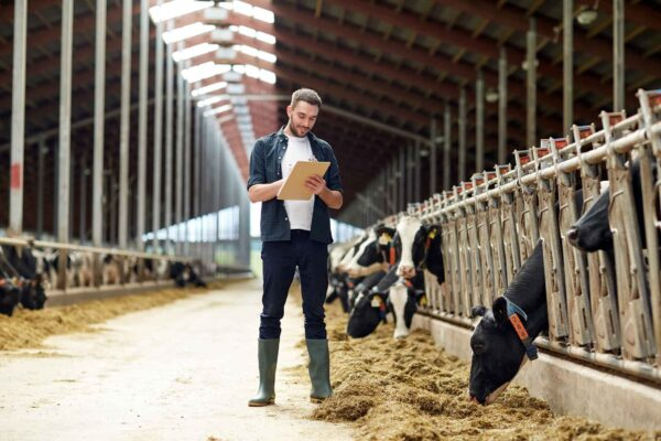 man standing in dairy barn holding a clipboard inspecting cows